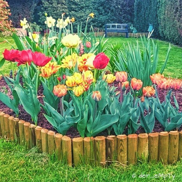 Tulips / Tulpen 2